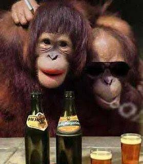 http://4.bp.blogspot.com/_quoBj9IDm4s/Shvq0JB2naI/AAAAAAAAAEM/OZNFGTd-FJs/s320/monyet-lucu.jpg