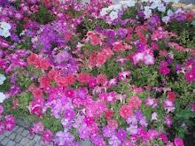 Flores colhidas no Mar de Chamas