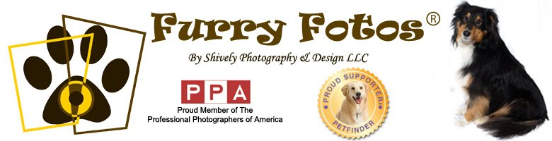 Furry Fotos by Shively Photography & Design LLC