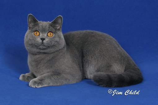 The Cat!!                                Castleray