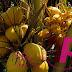 Khasiat air kelapa | Koleksi PETUA Tradisional, tips, information of MALAYSIA