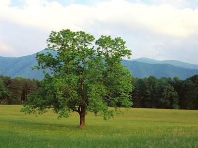 http://4.bp.blogspot.com/_qzyOWpu_RTk/TAxsjA8h2gI/AAAAAAAAAQ0/dR2Z7D_kHj4/s1600/tree.jpg