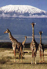 Kenya Flying Safaris