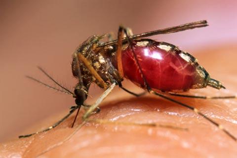 Dengue Hemorrhagic Fever. DENGUE VIRUS