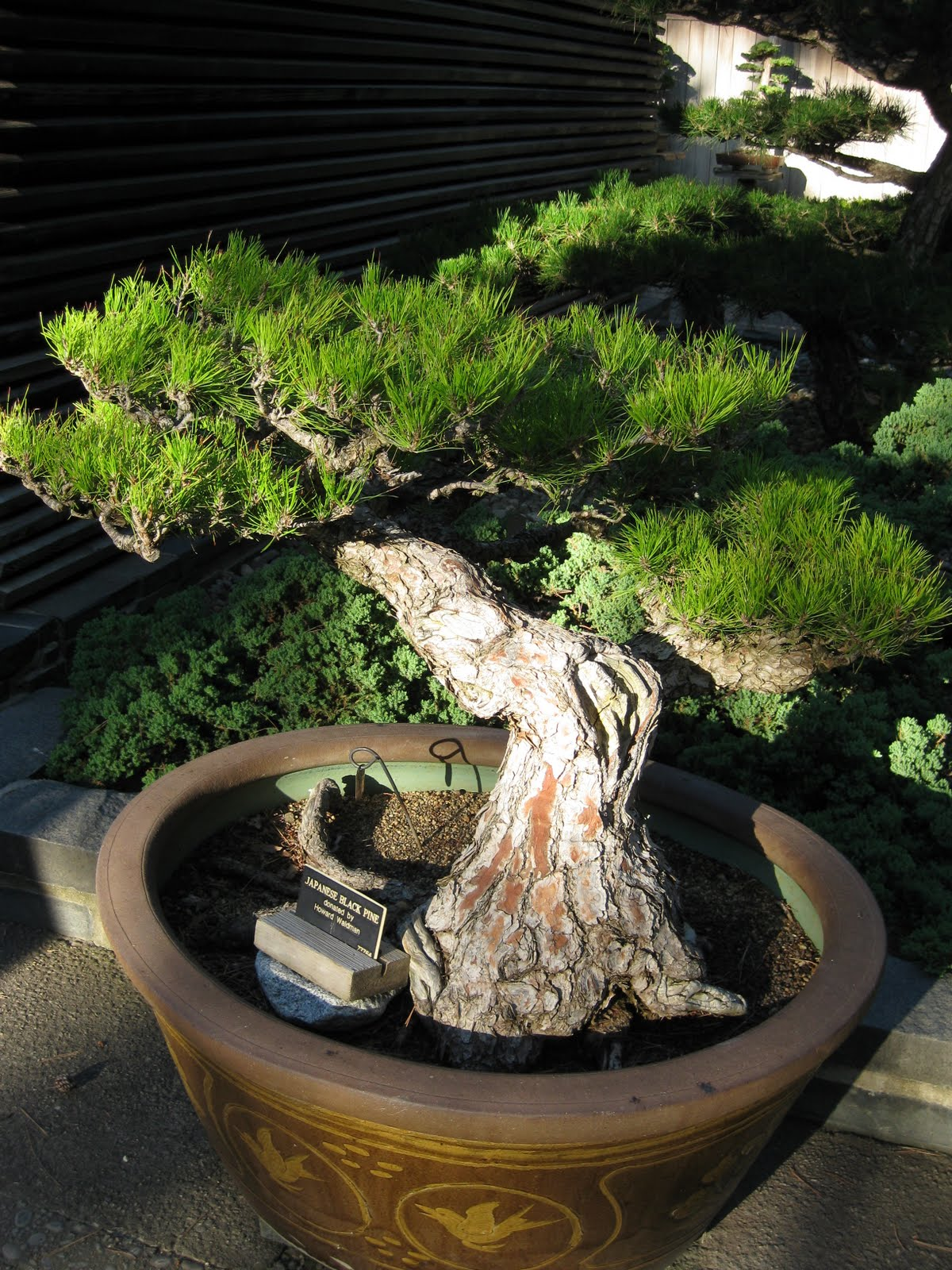 Rotary Botanical Gardens Hort Blog Bonsai