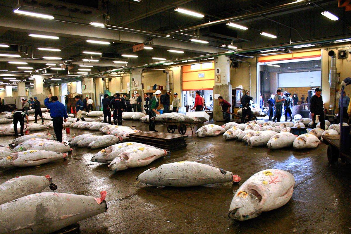 Pdhealey pdh photo travel spot tsukiji fish market tokyo for Tsukiji fish market