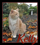 Farewell Dear Kelly
