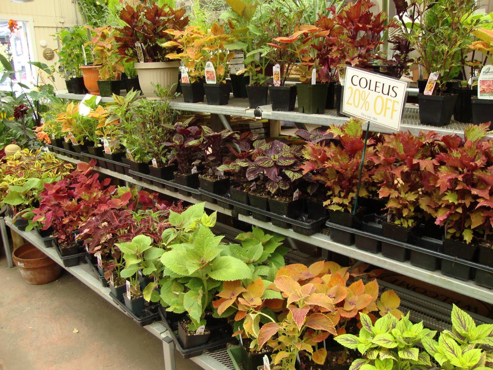 danger garden: A visit to City People\'s Garden Store