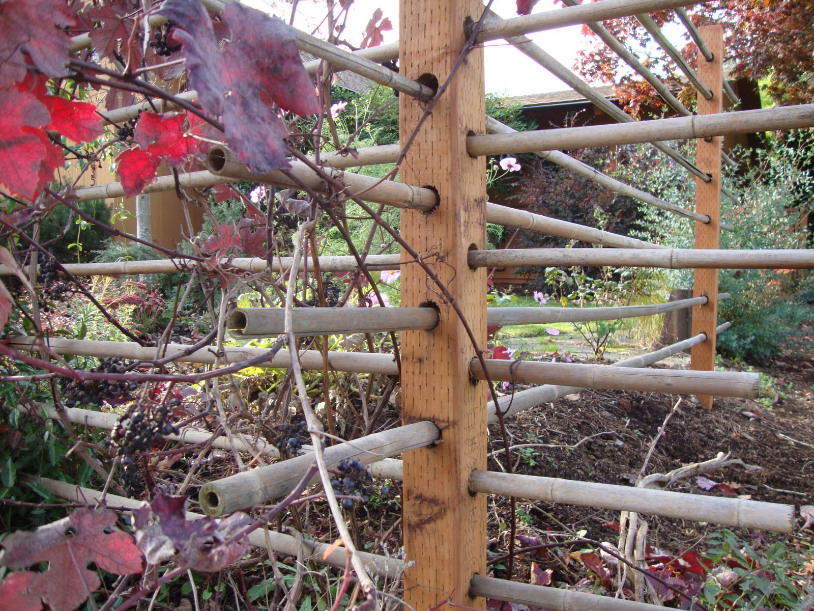 Best A Fence That Doubles As A Grape Arbor With Grape Arbor Designs  Pictures