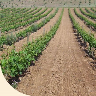 Equipo 5 el suelo y su importancia for Importancia de los suelos