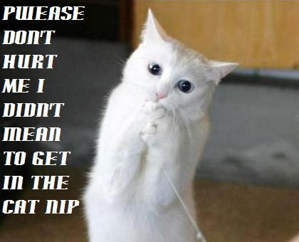 Facebook Lolcats n Funny Pictures of Cats I Can Has Cheezburger