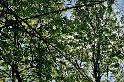 Bilderdijkstraat trees