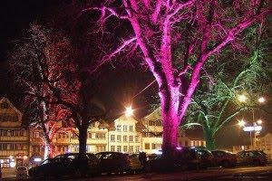 Nanotecnologia - Arboles que emiten Luz (bio-LED) Glowingtrees_37Oiq_54-300x200