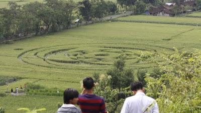 Indonesia - Crop Circles Cropcircle