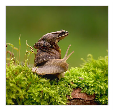 Frog riding a Snail