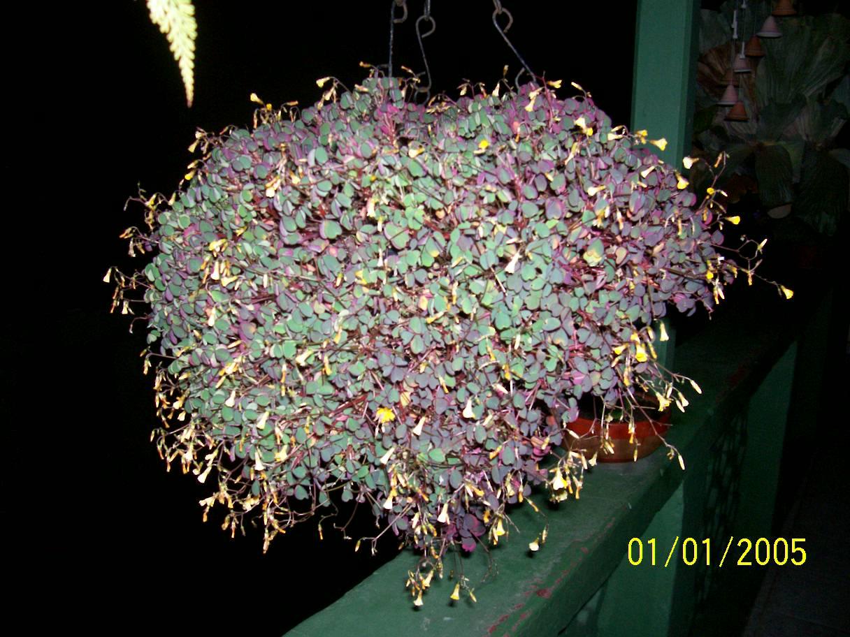 Proyecto de plantas ornamentales trebol for Modelo de proyecto de plantas ornamentales