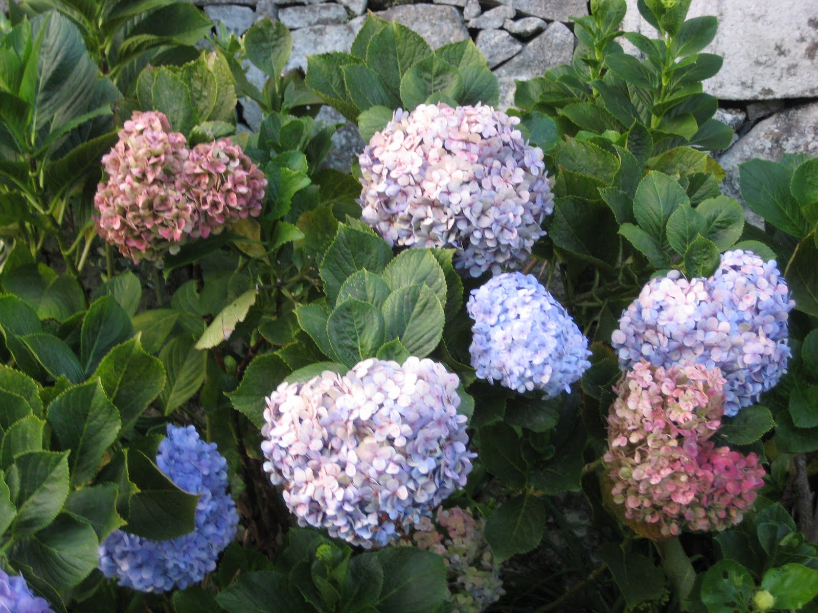 proyecto de plantas ornamentales ortencias