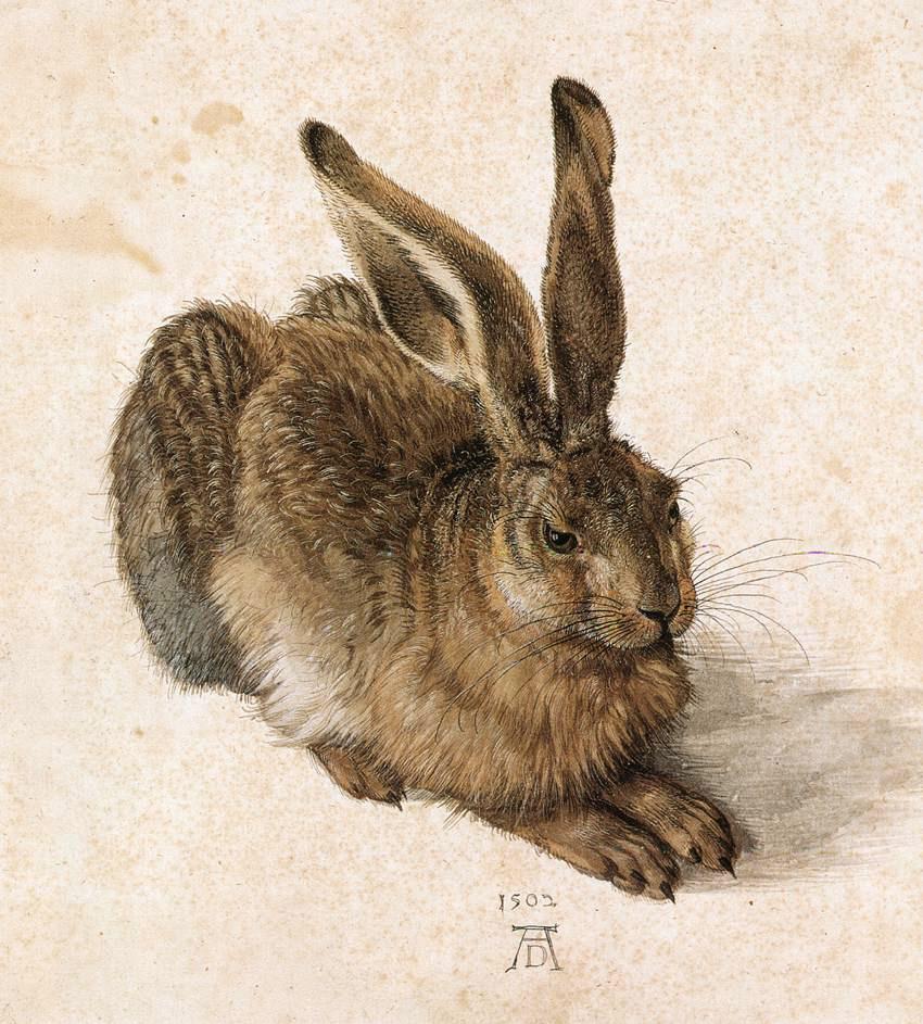 Young Hare (1502) ~ Albrecht Dürer
