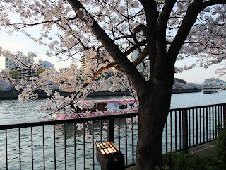 大川の遊覧船と桜