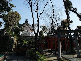 生魂神社の桜