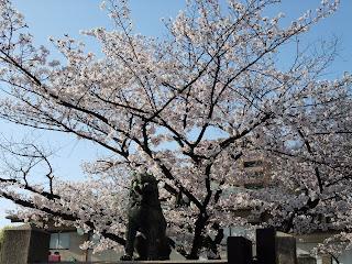 生魂神社の狛犬と桜