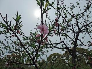 藤田邸跡公園の花