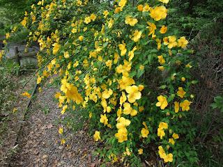 藤田邸跡公園の花々