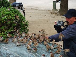 大阪城公園の手乗りスズメ