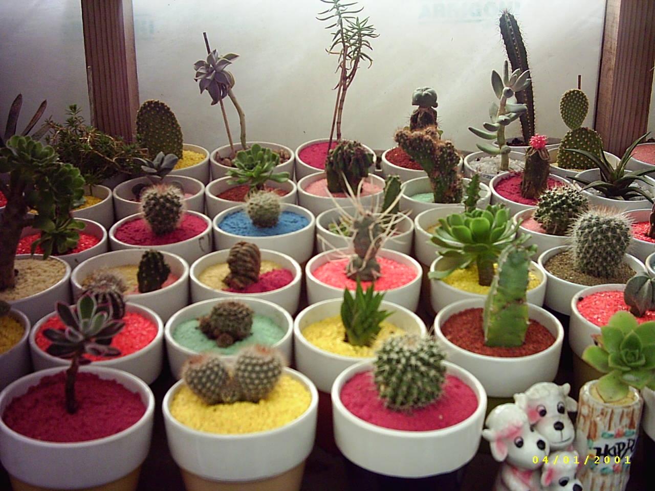 A juanan le gustar a pon un cactus en tu vida for Cactus decoracion