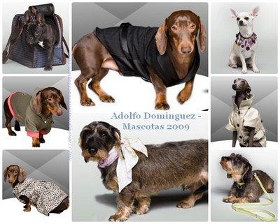 belleza y fragancia ropa para perros adolfo dominguez