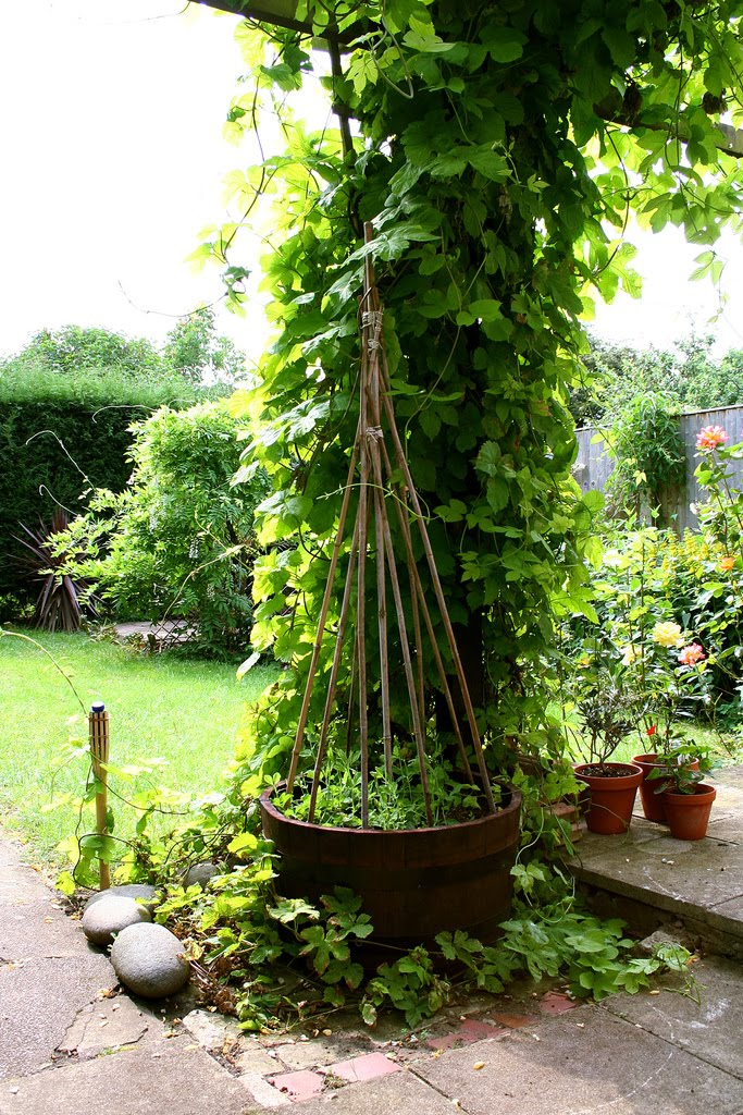1000 Images About Garden On Pinterest Gardens Arbors 640 x 480