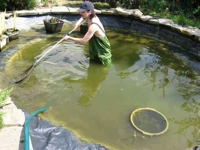 Ewa in the garden garden ponds cleaning garden fish pond for Garden pond cleaning