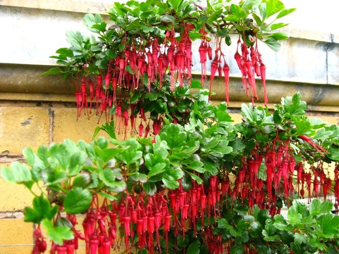 Ewa In The Garden 33 Photos Of Birmingham Botanical Garden