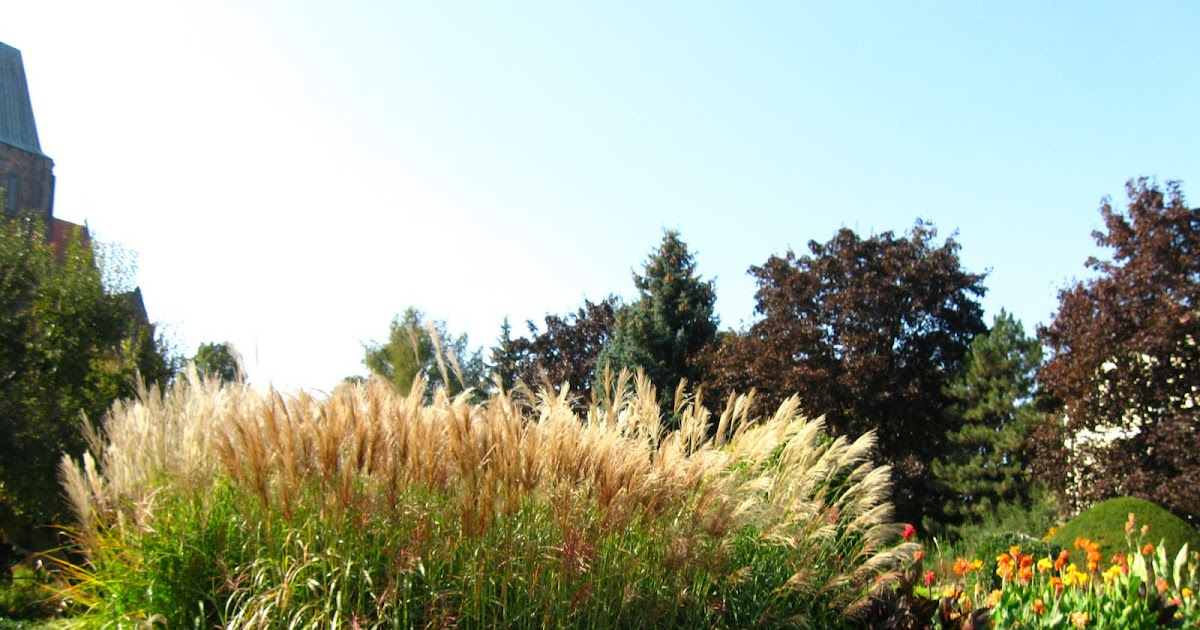 Ewa in the garden tall ornamental grass miscanthus for Tall oriental grass