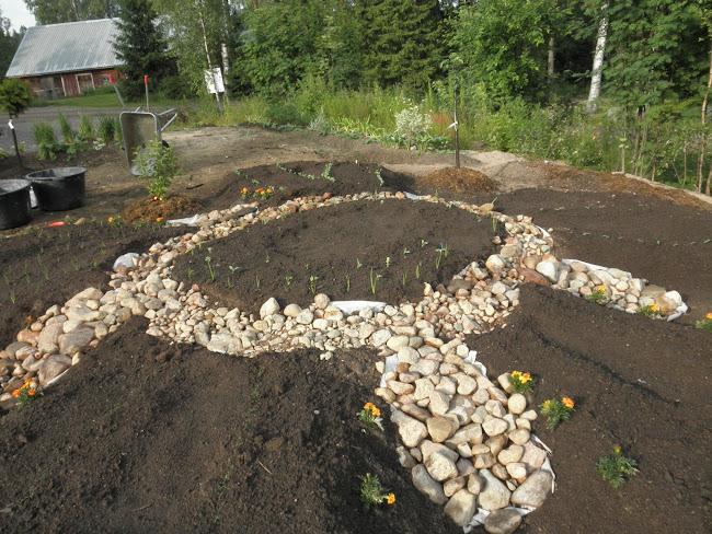 herneitä, sipuleita, avomaakurkkua, porkkanaa, tilliä, ruohosipulia ja korianteriä tulollaan