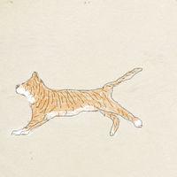 Grynnas tigerhund