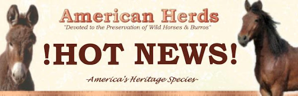 American Herds Hot News!