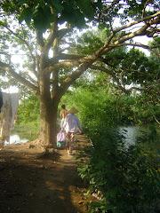 Hai Phong countryside