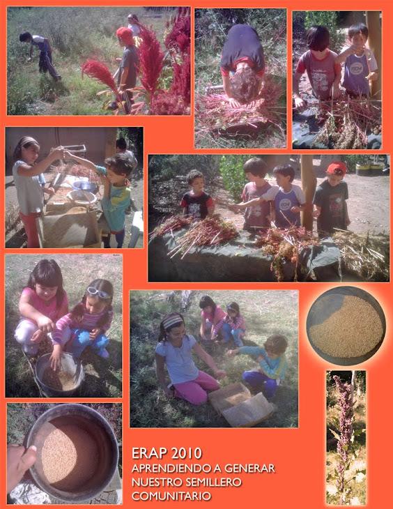 Creamos nuestro primer semillero de Quinoa y Amaranto!!!