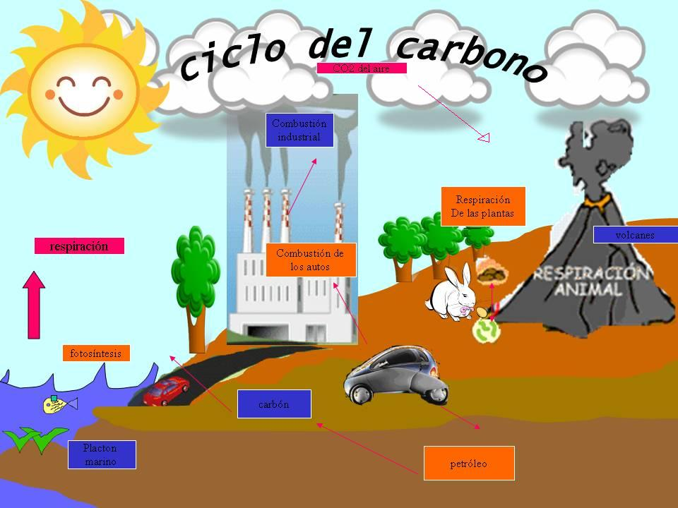 El Ciclo Del Bioxido De Carbono