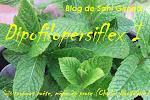 DiPofilopersiflex I