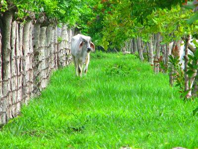 Tamarindo, Costa Rica Daily Photo