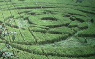 fenomena alam terbaru Crop Circle atau lingkaran taman