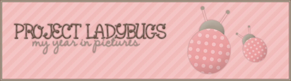 {Project Ladybugs ~ my year in pictures}