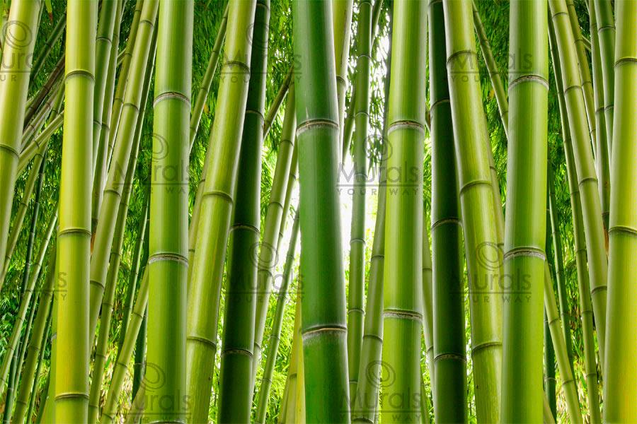 Bamboo serenity mural pinaywife 39 s picks etc for Bamboo mural wallpaper