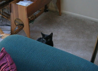 Rascal playing peek-a-boo on Midnight Monday.
