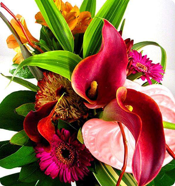 Fotos de flores flores ex ticas - Flores tropicales fotos ...