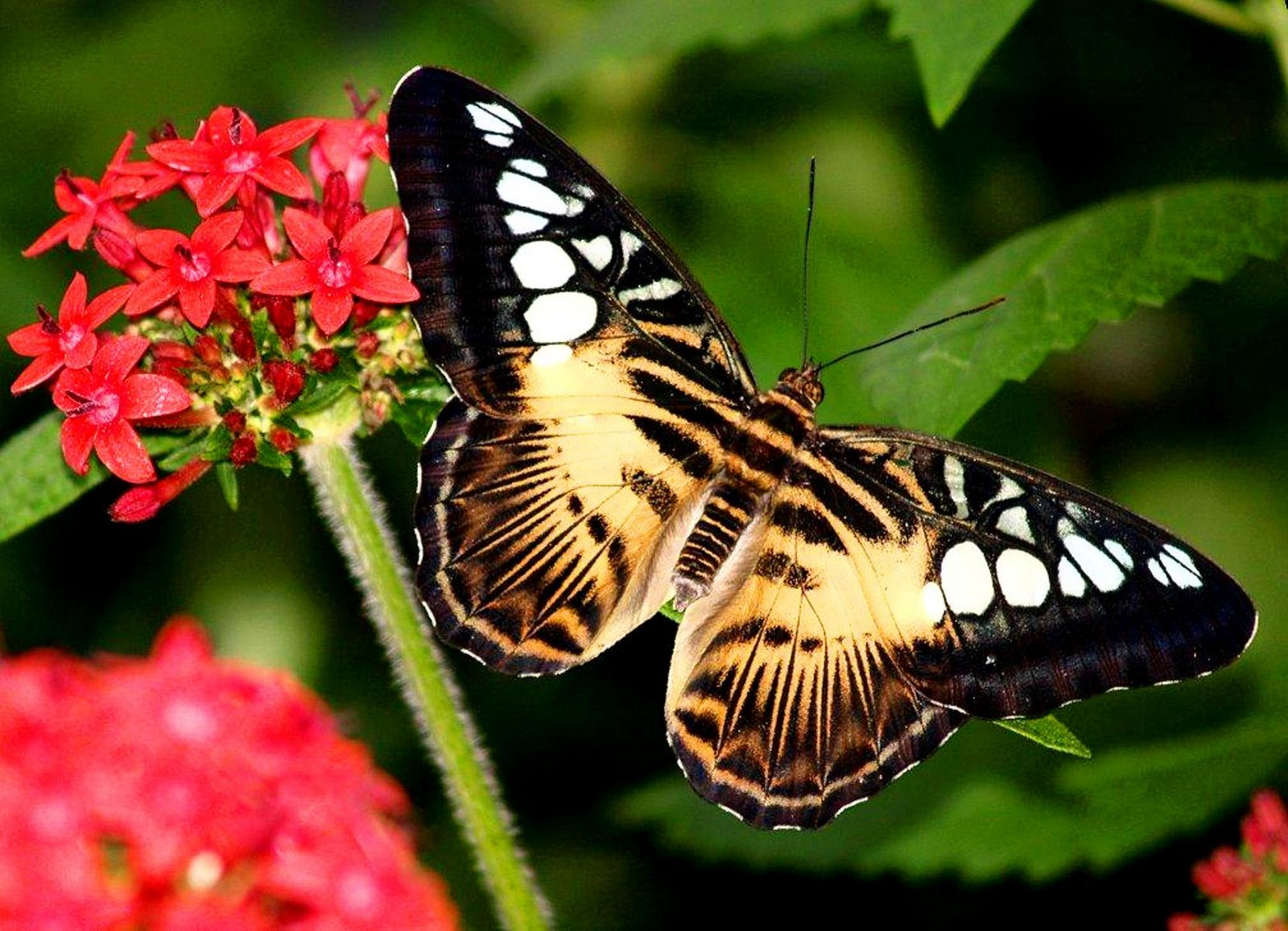 Best Butterfly Wallpapers