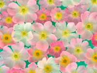 free wallpaper flowers high quality wallpaper flower desktop wallpapers