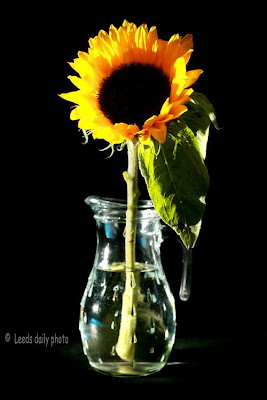 Sunflower and Vase Leeds